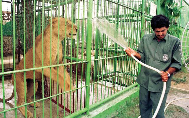 بلدية دبي معايير حديقة الحيوان عالمية عبر الإمارات أخبار وتقارير البيان