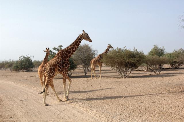 جزيرة صير بني ياس يستوطنها 30 نوعا من الحيوانات البرية والطيور
