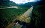 الصورة: معابر وجسور الحيوانات عبر العالم