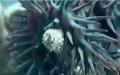 الصورة: الصورة: شاهد.. الحاجز المرجاني العظيم في أستراليا