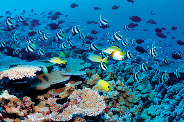 التآكل الحمضي يهدد السلسلة الغذائية في المحيطات فكر وفن مرايا البيان