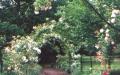 الصورة: الصورة: مفردات الطبيعة.. ملاذ جميل للروح في زحمة الضغوطات
