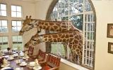 الصورة: بالصور: قصر الزرافات في كينيا