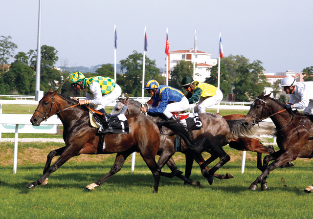الصورة : من سباقات مهرجان منصور بن زايد للخيول العربية من المصدر