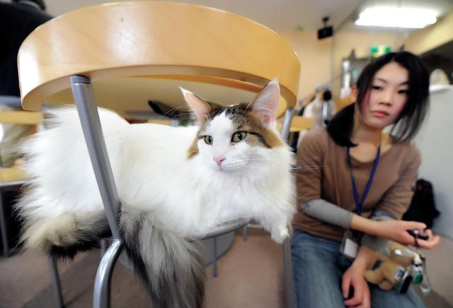 الصورة : عدم الحمل بسبب تربية القطط