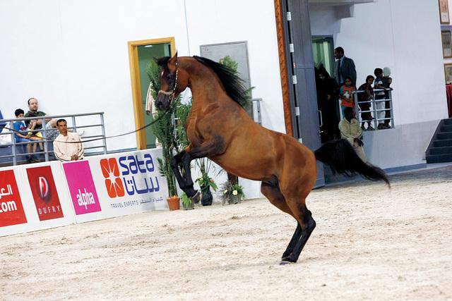 الصورة : مسابقة ترويض الخيول إحدى فعاليات الكرنفال
