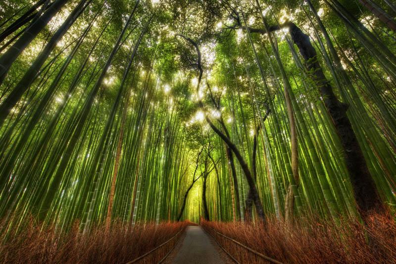 غابات الخيزران في اليابان Image