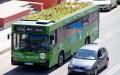 الصورة: الصورة: حافلات صديقة للبيئة لتنقية الهواء في شوارع إسبانيا