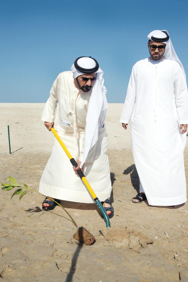 الصورة : نائب رئيس الدولة يزرع شجرة قرم «المانجروف الأحمر»
