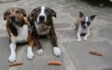 """الصورة: شاهد..الكلب الأكثر """"جشعاً""""!"""