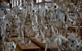 الصورة: الصورة: موكب الهياكل عظمية في أكبر معرض للحفريات