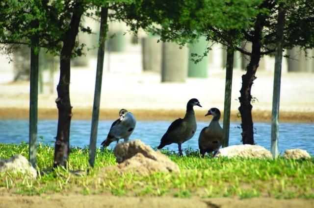 الصورة : 3استراحة طيور في المرموم
