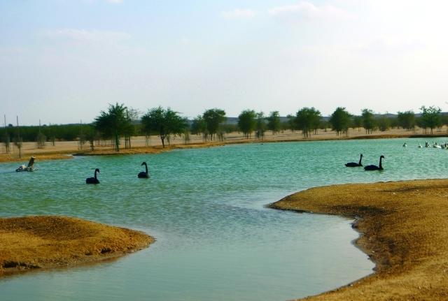 الصورة : محمية المرموم موئل الطيور المهاجرة