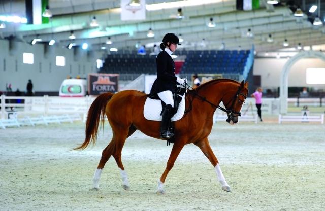 الصورة : أجمل الخيول تتنافس في مسابقات الترويض