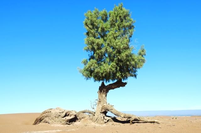 الأثل شجرة أهل سبأ ملاحق رمضان آية وتفسير البيان