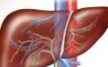 الصورة: الصورة: 6 علامات تشير إلى وجود ضغوط على الكبد