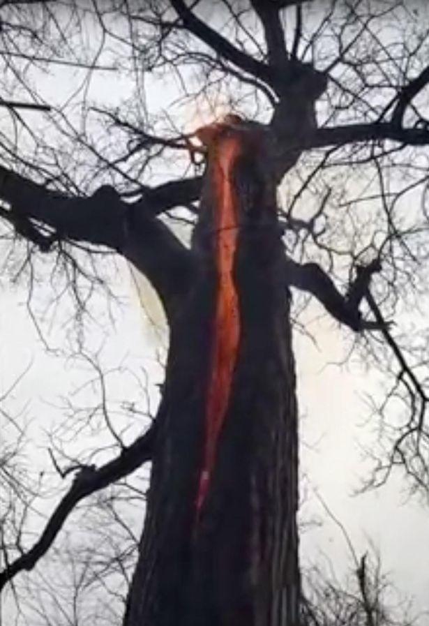 23f2450aa شجرة الشيطان» ترهب المتنزهين في أوهايو - البيان