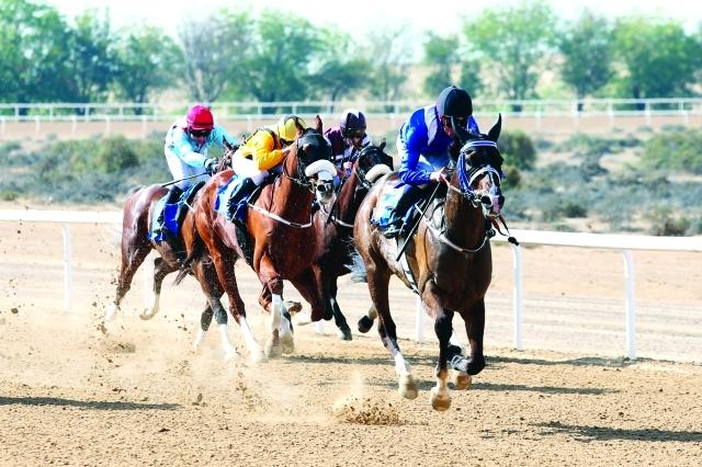 الصورة : ■ خيول حمدان بن راشد تخطف الأضواء     تصوير: ناصر بابو