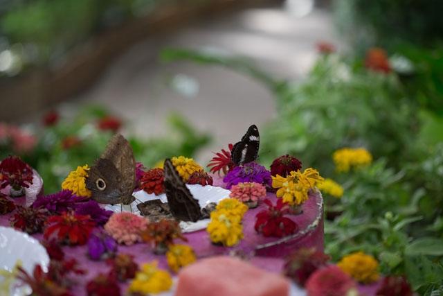 حديقة الفراشات في دبي معزوفة الجمال والتنوع الطبيعي معرض الصور