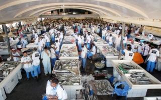 الصورة: ماذا يحصل في سوق السمك بـدبي الساعة 05:30 صباحاً