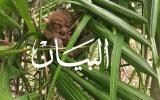الصورة: «التارسير» حيوان غريب ينتحر لو أزعجته