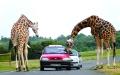 الصورة: الصورة: حيوانات متطفلة .. وسياح منزعجون