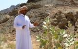 الصورة: ح2: مصفوت.. نقوش الحضارات وخير المزارع