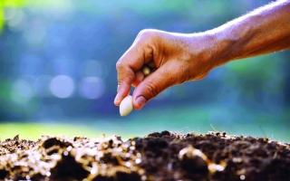 الصورة: الصورة: فاطمة الجلاف:  الأمن الغذائي ثمرة الزراعة المستدامة