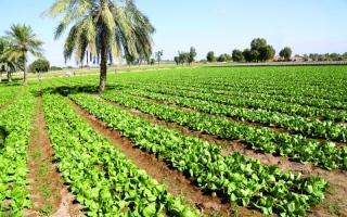الصورة: الصورة: الإمارات الأولى عربياً و30 عالمياً على مؤشر أمن الغذاء