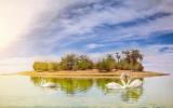 الصورة: اكتشف «بحيرات القدرة » موطن 170 نوعا من الطيور