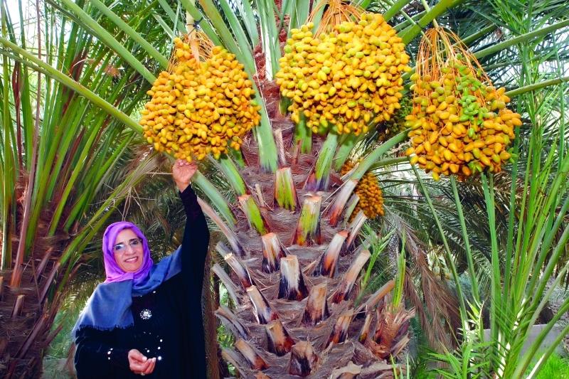 الصورة : ■  علاقة الخير والكرم في مجتمع الإمارات