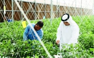 الصورة: الزراعة المائية مستقبل المحاصيل المستدامة