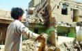 الصورة: ثلاثة عقود من عزف إيران على وتر الطائفية باليمن