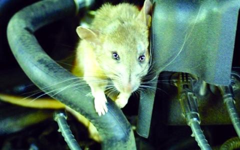 الصورة: حيوانات تسكن المركبات