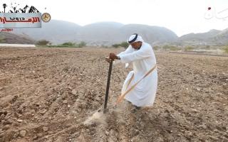 الصورة: الصورة: ح4: قرية المَيّة في الفجيرة.. الزراعة بين قمم الجبال