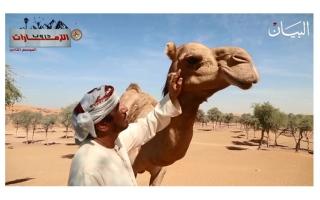 الصورة: شاهدوا لماذا كانت بطحا آل علي بأم القيوين مقصداً للقبائل