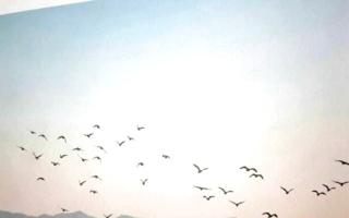 الصورة: عبد الرضا السجواني: البعد الإنساني مقياس قيمة الرواية