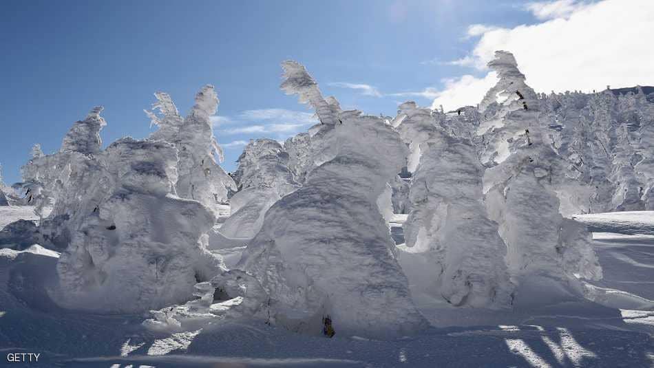 وحوش الثلج.. مناظر خلابة في اليابان