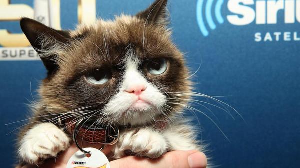 """""""القط الغاضب"""" يتسبب بغرامة 700 ألف دولار"""
