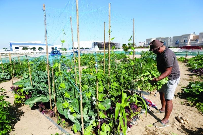 غرس روح الزراعة لدى الجمهور لجني محاصيل نوعية