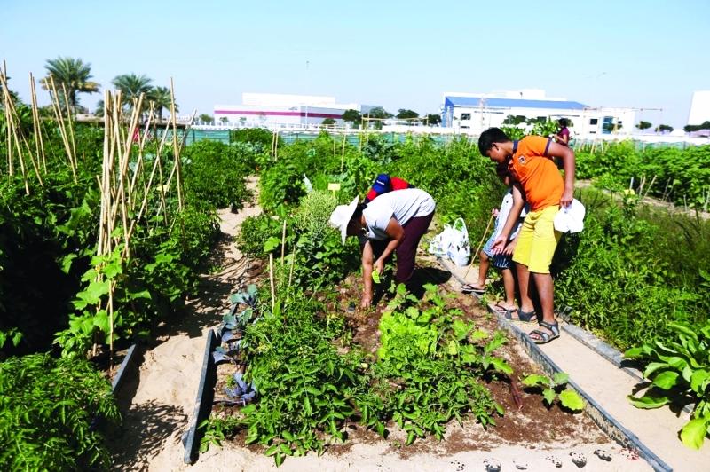 مساحات وفّرتها واحة دبي للسيليكون لاستغلال مواهب المتسابقين في الزراعة | تصوير: خولة خميس