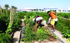 الصورة: الزراعة المجتمعية.. قطاف الصحة والبيئة والجمال