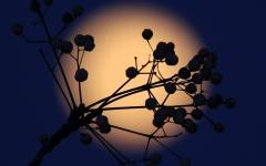 الصورة: مشاهد القمر العملاق تبهر الناظرين