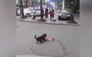 الصورة: مشهد مؤثر لكلب تجاه آخر صدمته سيارة