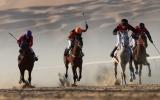 الصورة: «ليوا» يستضيف منافسات الخيول العربية احتفالاً بالحدث