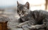 الصورة: دخلت امرأة السجن في 40 قطة حبستها