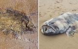 الصورة: فيديو .. مخلوق بحري غامض يثير حيرة العلماء
