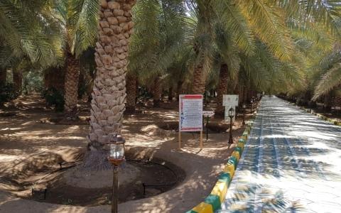 الصورة: مزارع النخيل في الإمارات.. غرسٌ يؤتي ثمار التفوّق