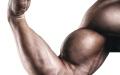 الصورة: زراعة عضلات من خلايا جلدية للمرة الأولى عالمياً