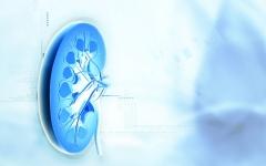 الصورة: مرض الكلى يزيد خطر الإصابة بالسكري